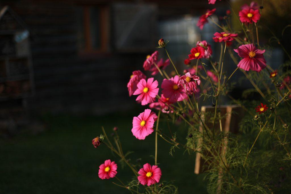 """""""Un bouquet de roses pour rêver Une fleur que j'ose te donner Une fleur orange pour s'ensoleiller Une fleur étrange pour imaginer"""" Olga Forest"""