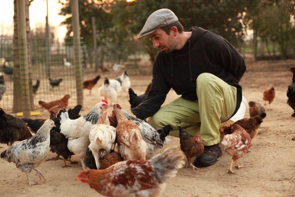 A table !! Venez donner de bonnes petites graines à nos poules tous les dimanches !